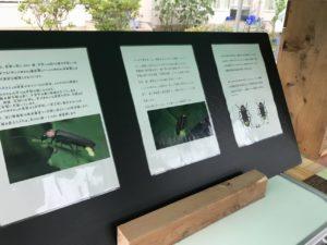 ほたる鑑賞会2019